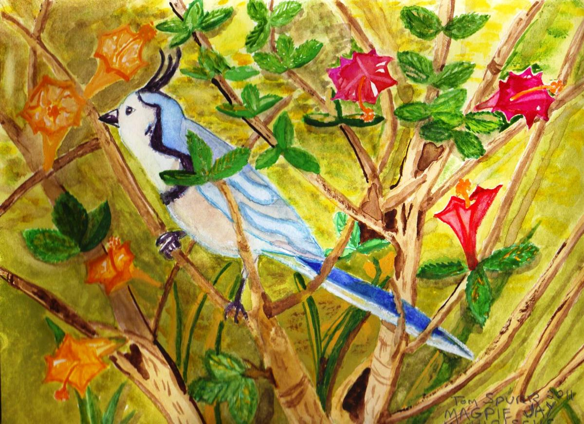 Magpie Jay in Hibiscus, a Watercolor Painting by the author.
