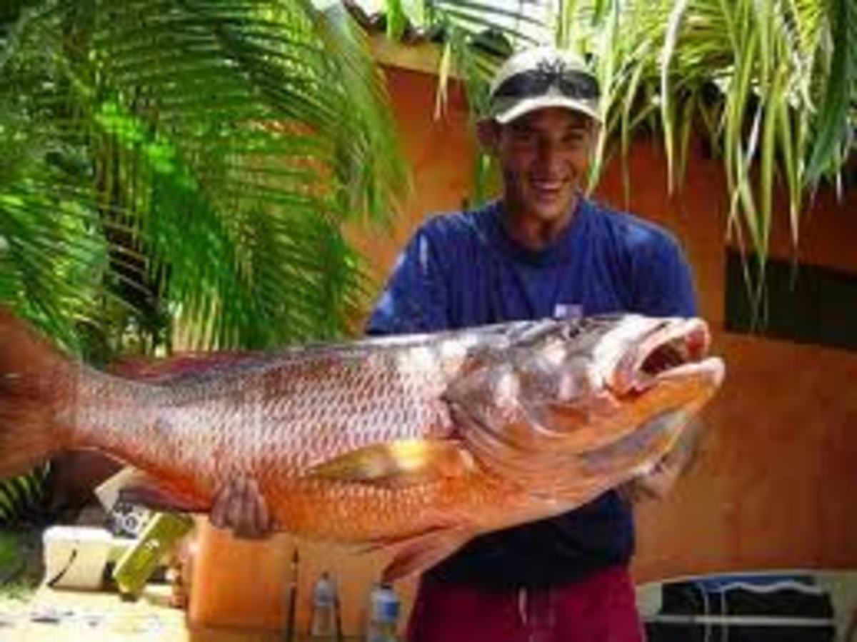 A Local Pescador (fisherman) Showing Off His Catch, a Big Red Snapper (Pargo en Espanol)