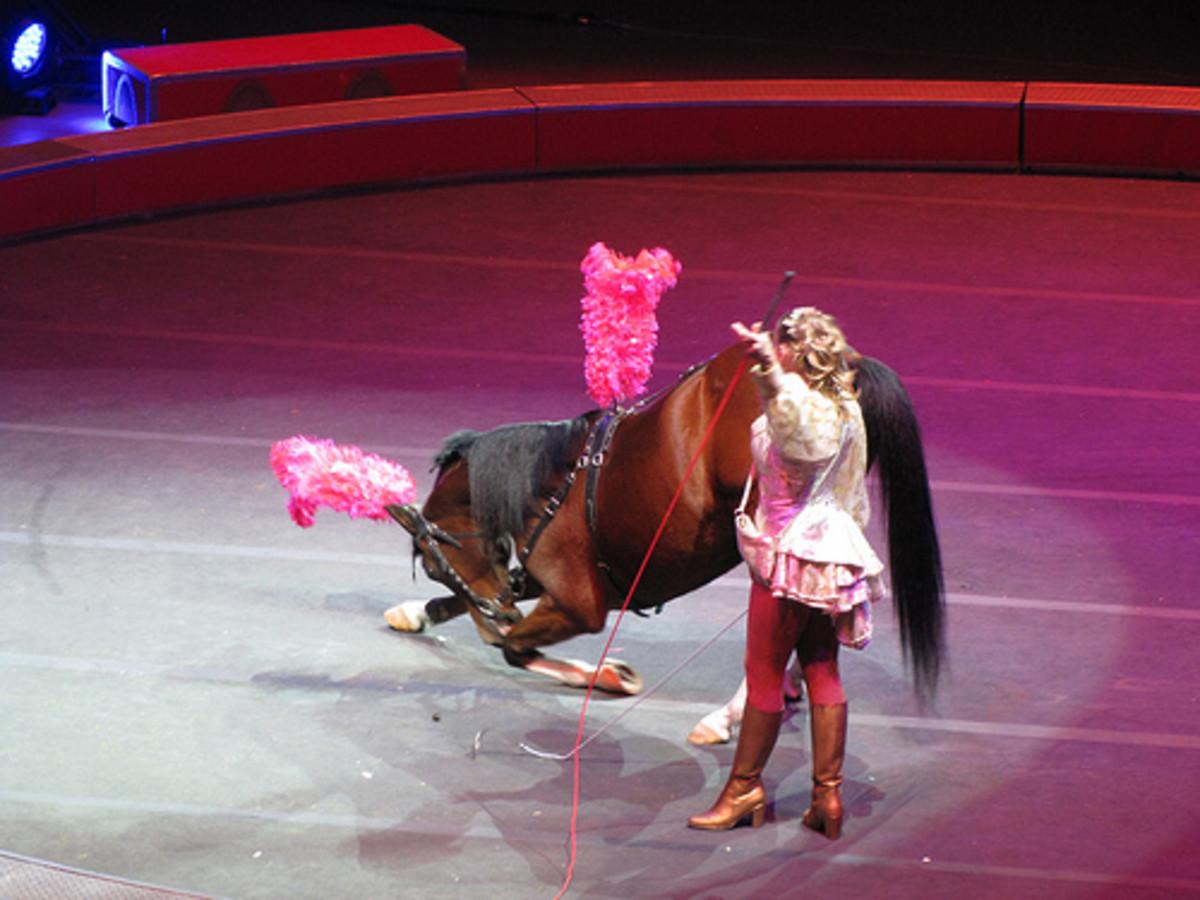 best-costumed-horses