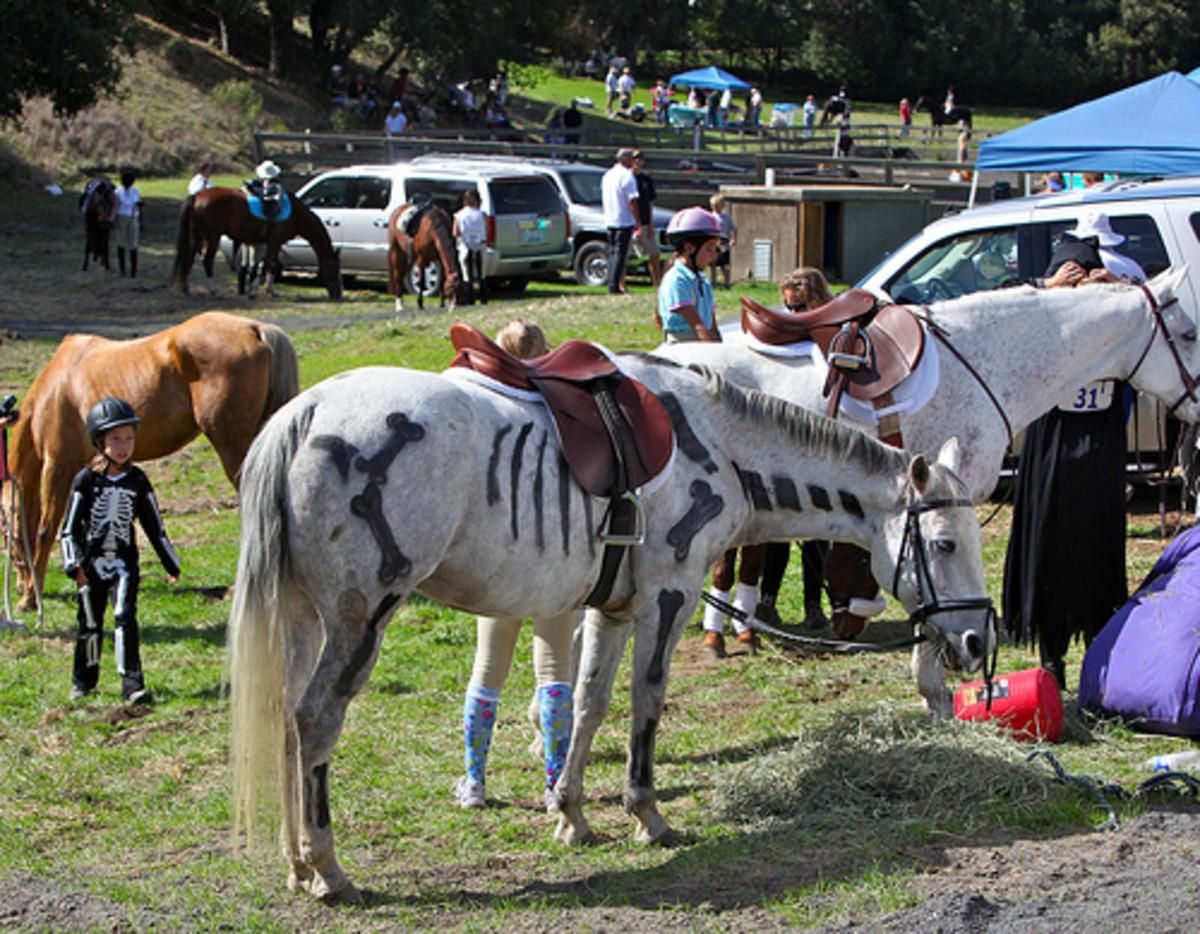 Costumed Horses.