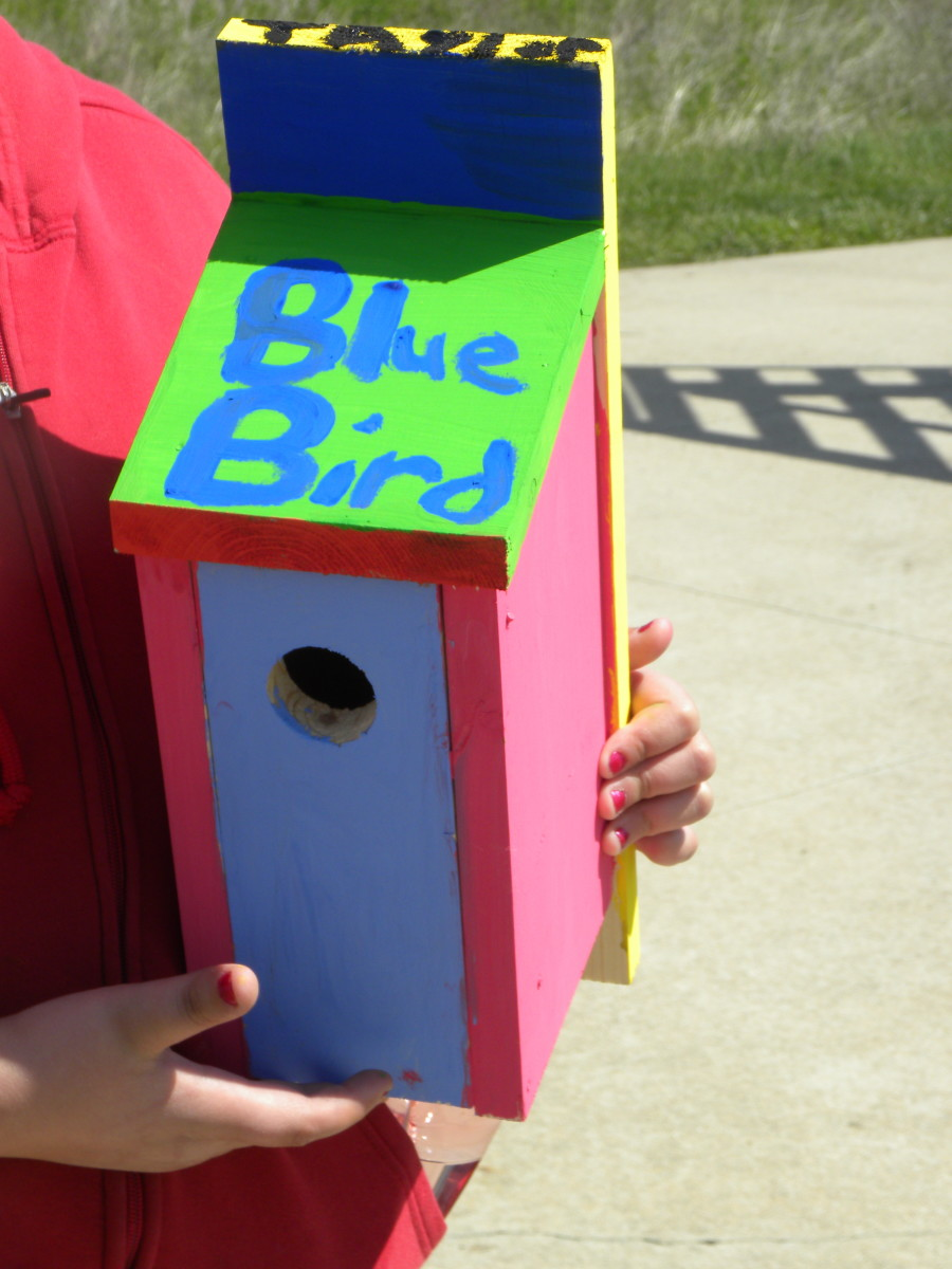 A bluebird nesting box is an easy project for kids  and provides shelter for young birds.