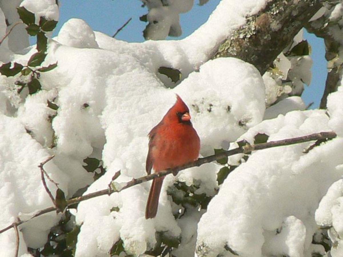 Creating a Backyard Bird Habitat is Easy