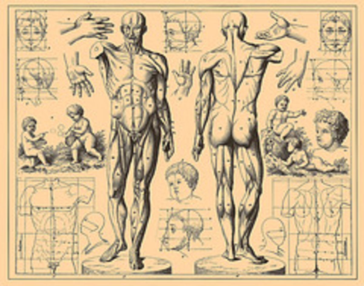 A Knowledge of Anatomy Can Help With Everyday Health Decisions