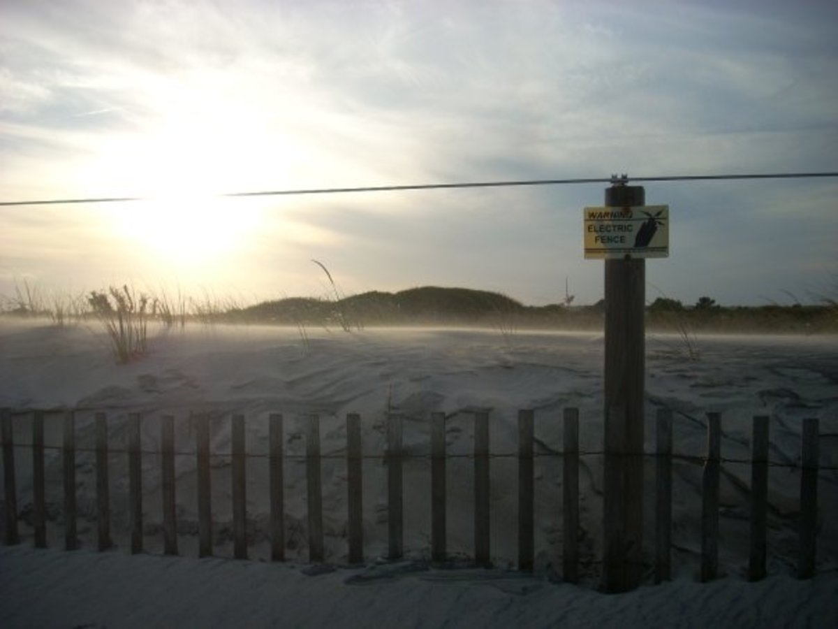 Assateague Island in September