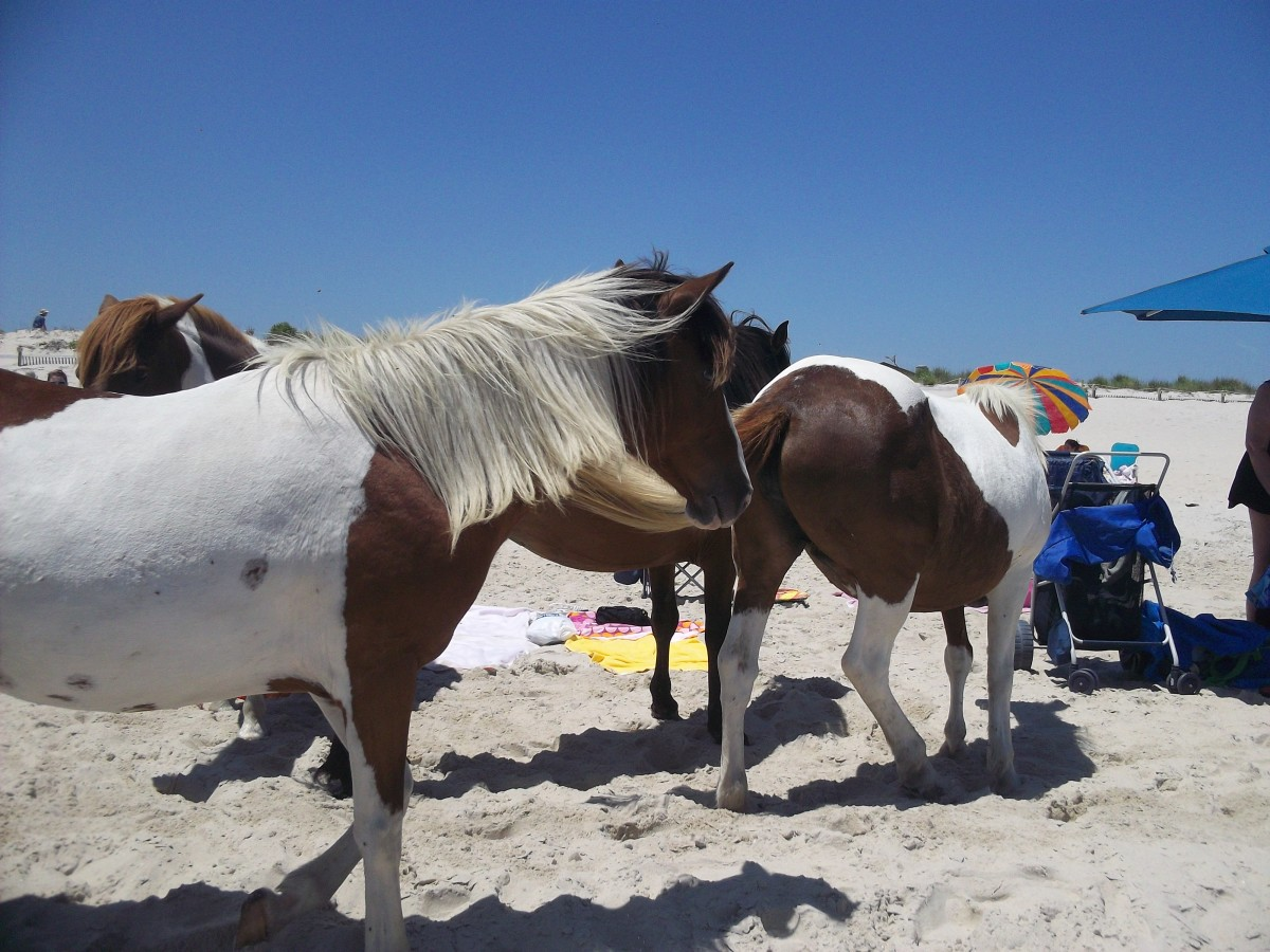 The horses take over the beach sometimes.