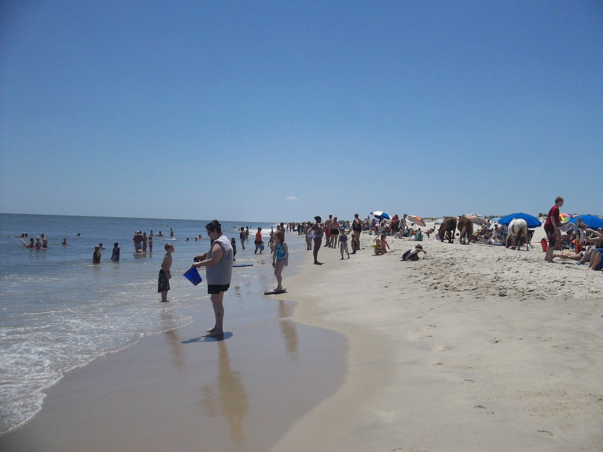 Assateague Island in the summer.