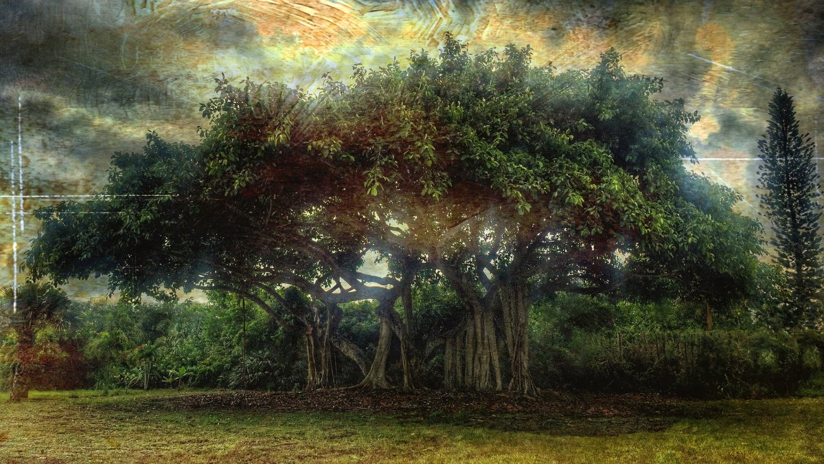 a-banyan-tree-its-uses