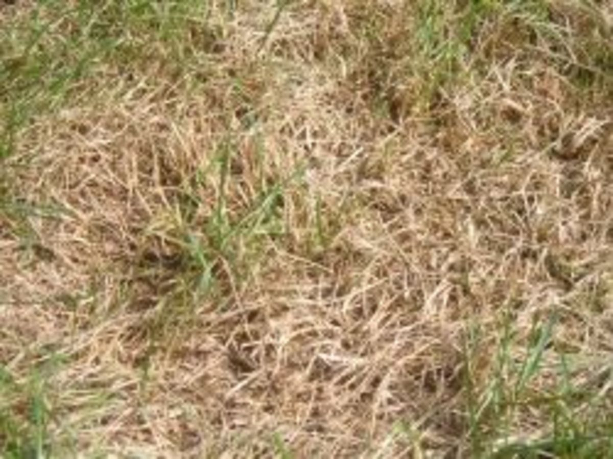 How To Plant Grass Seed In Bare Spots Spot Seeding A