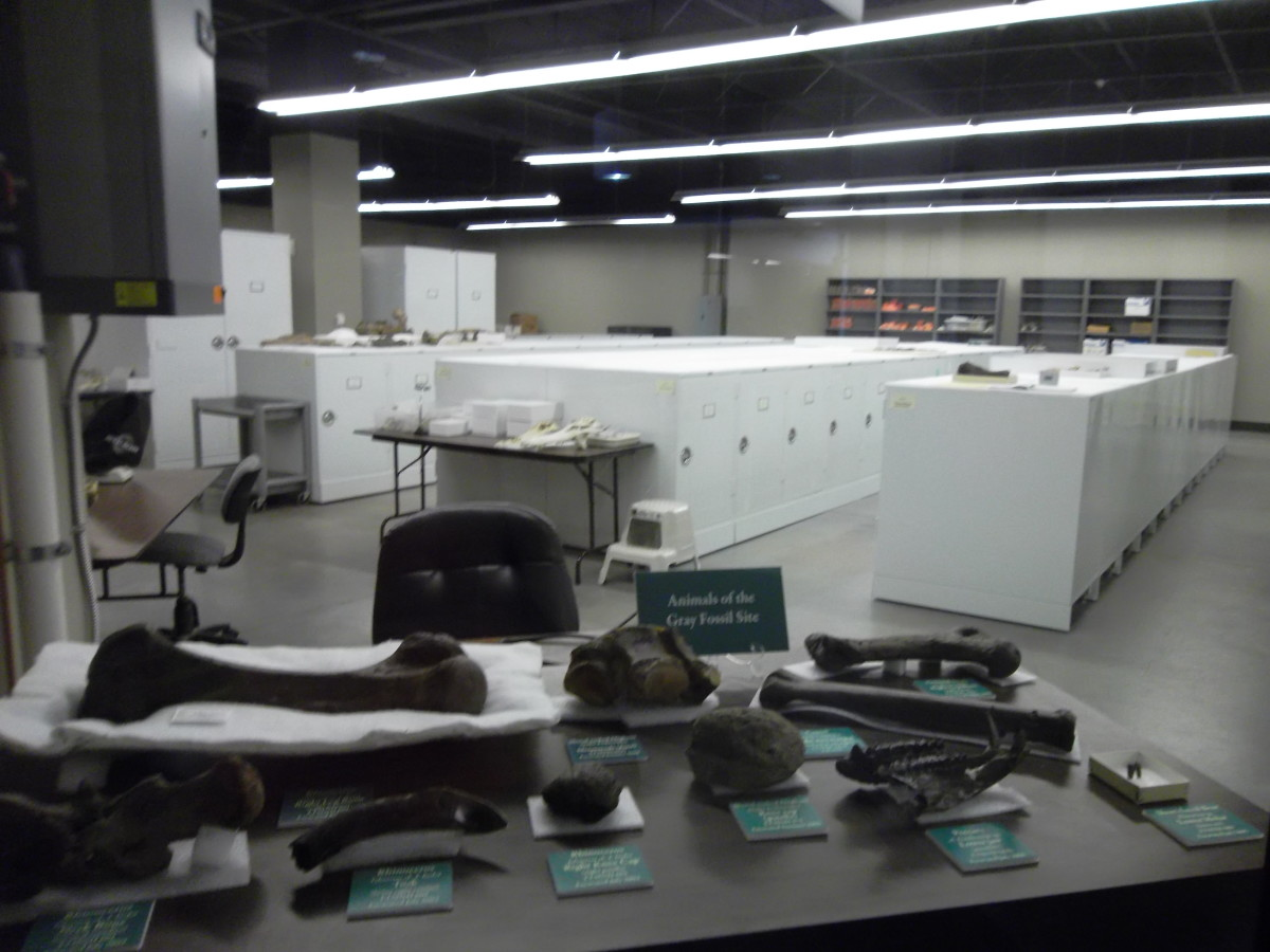 The lab at the Gray Fossil Site.  Many paleoanthropologists spend time in similar labs, working to process, identify, and preserve fossils.