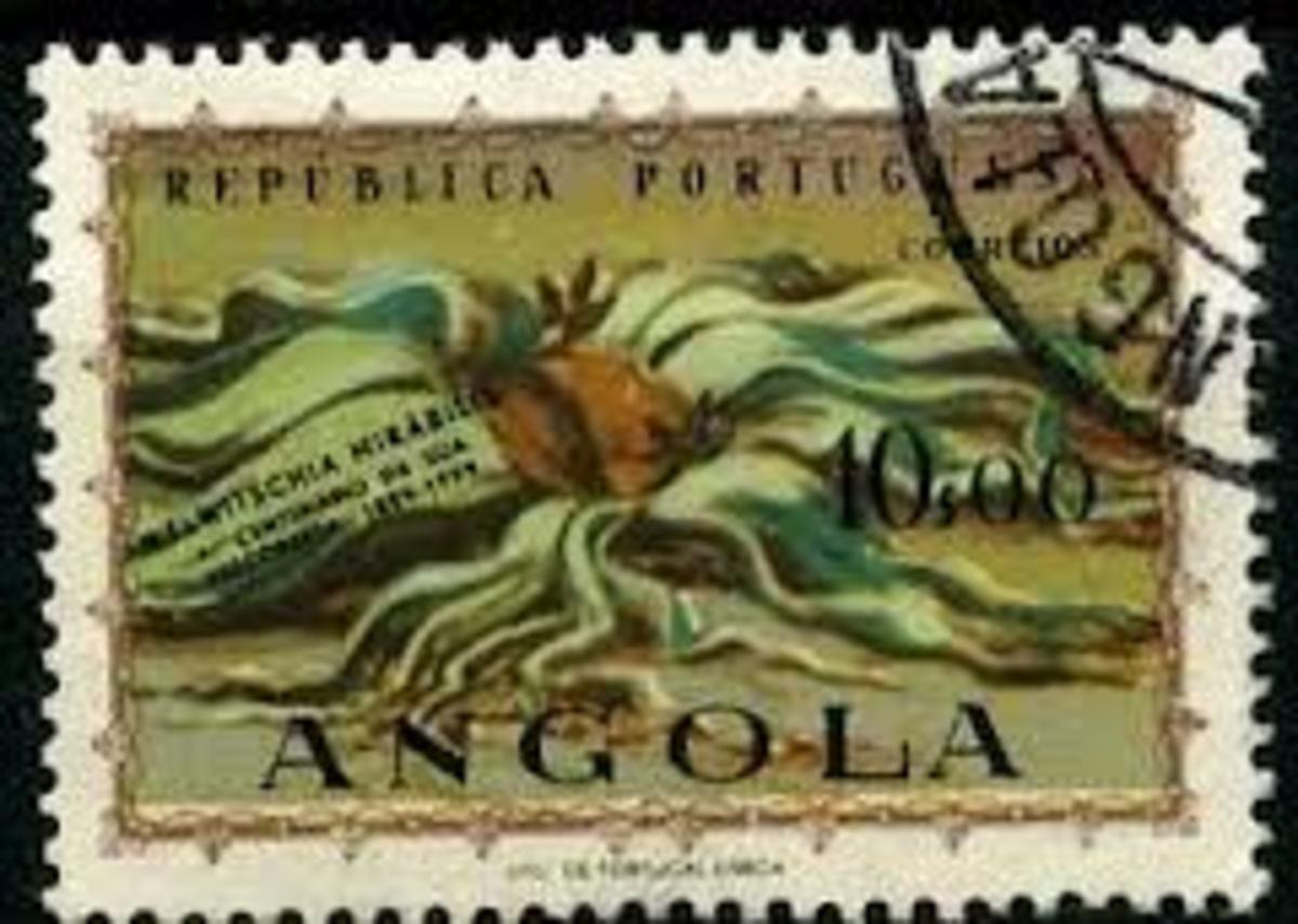Welwitschia mirabilis  postage stamp.