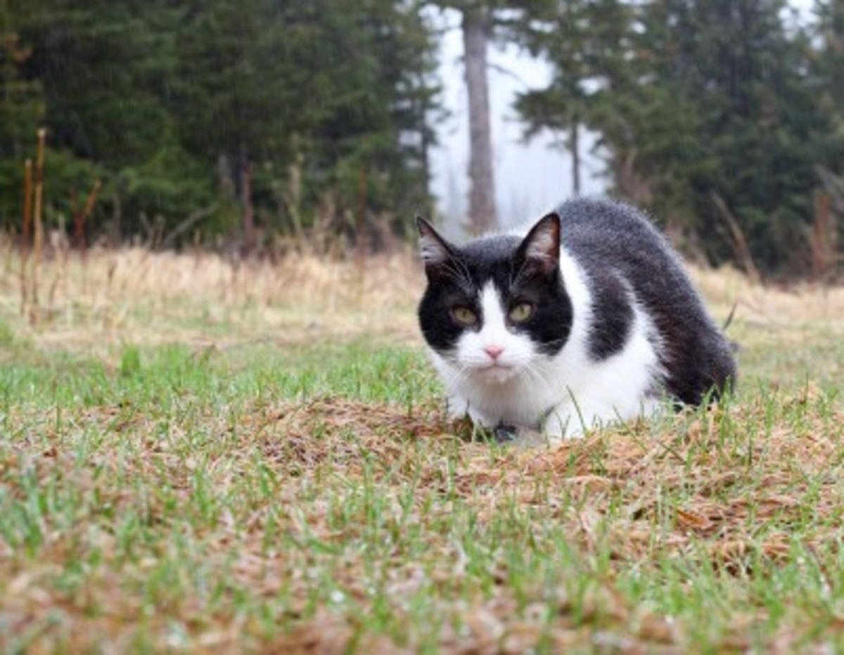 how to get rid of feral cats humanely