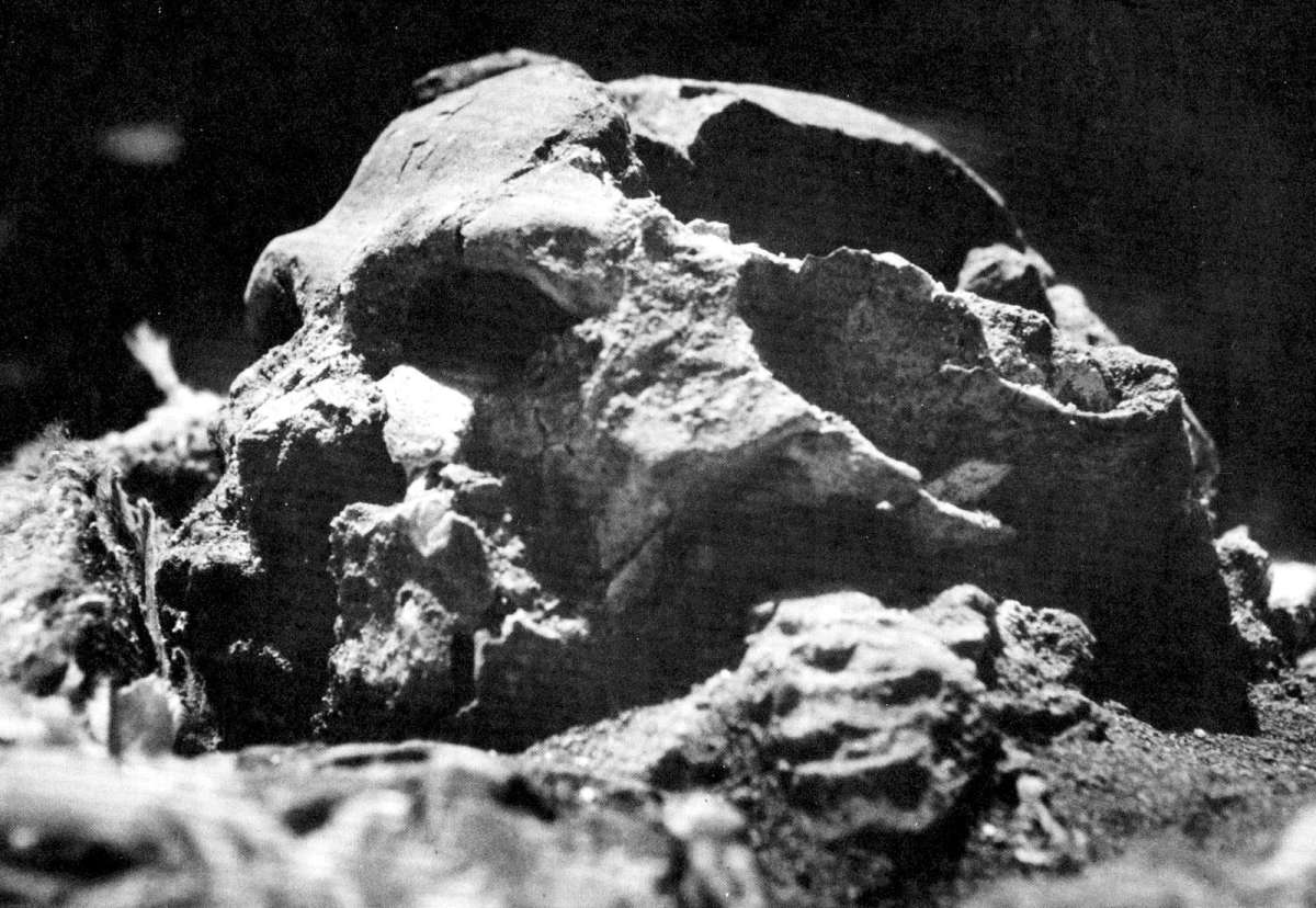 Skull found in Shanidar Cave