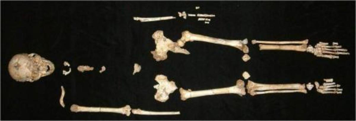 Skeleton of a hobbit!
