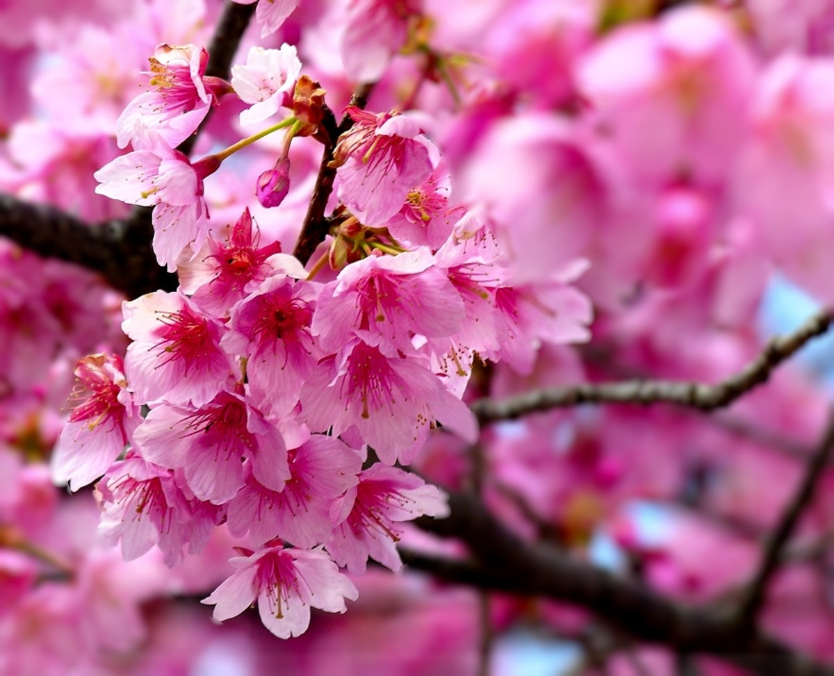 Top 10 Most Beautiful Flowers In The World Hubpages