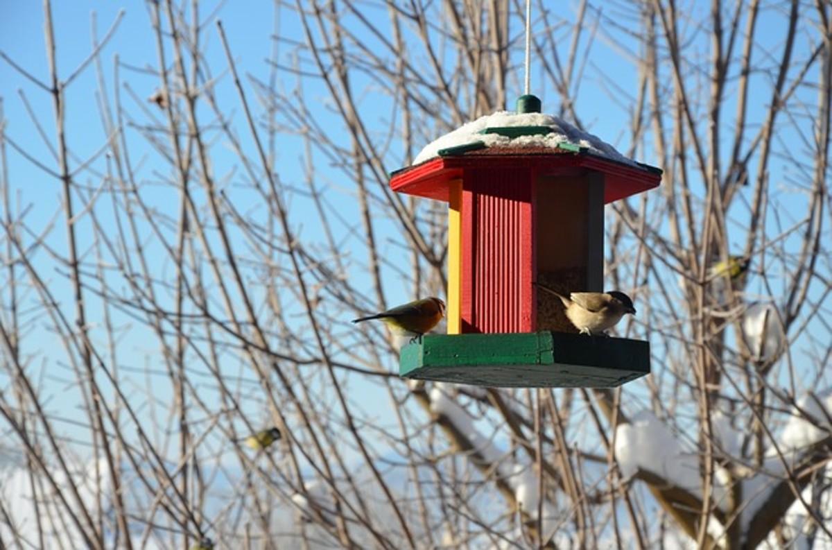 Gorging of bird seed