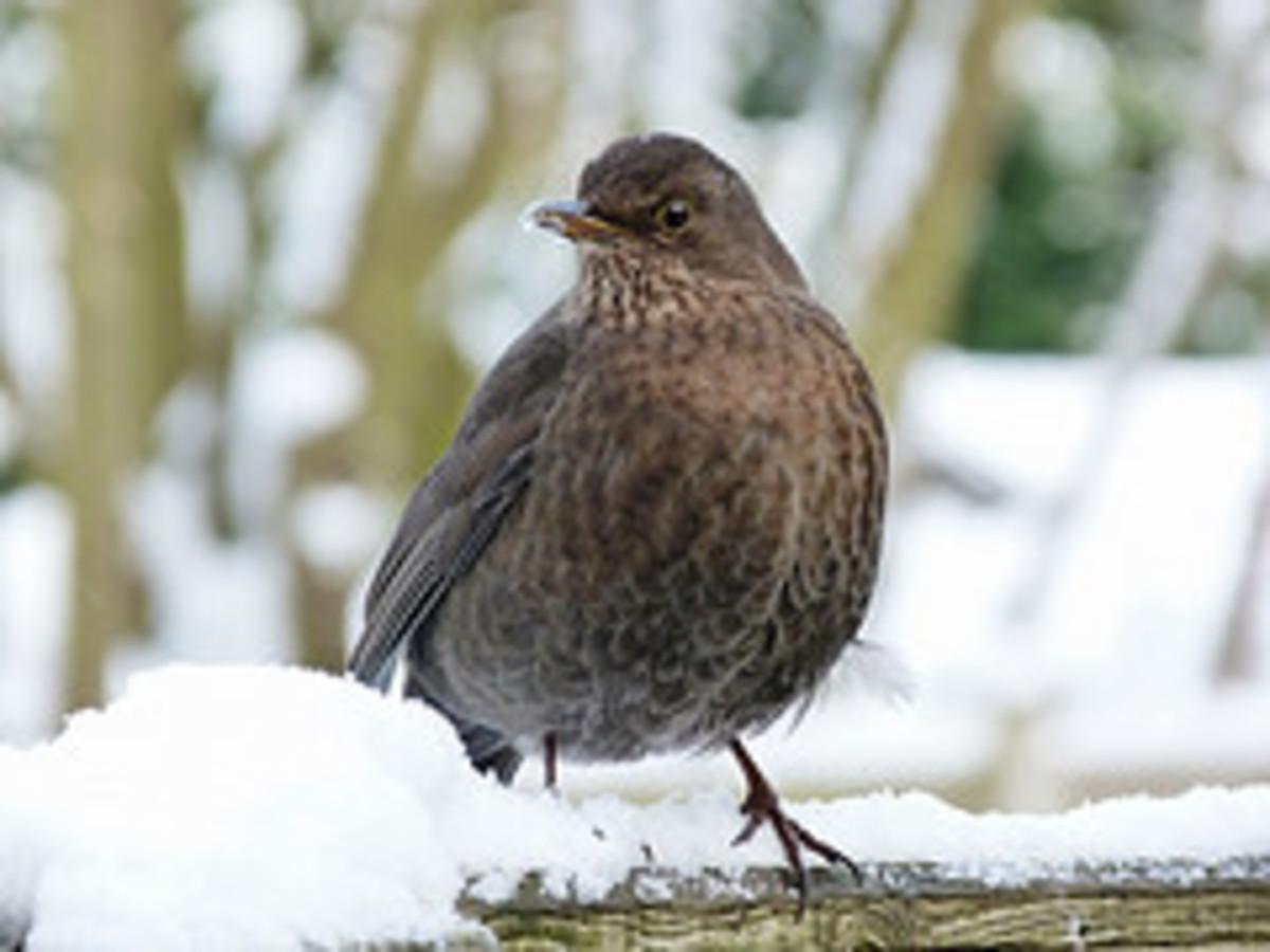 Birds play on winter morning