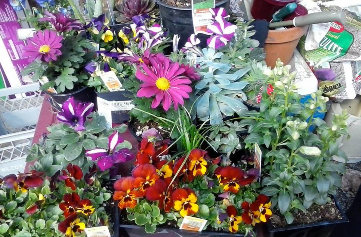 Spring flowers Lori Colbo