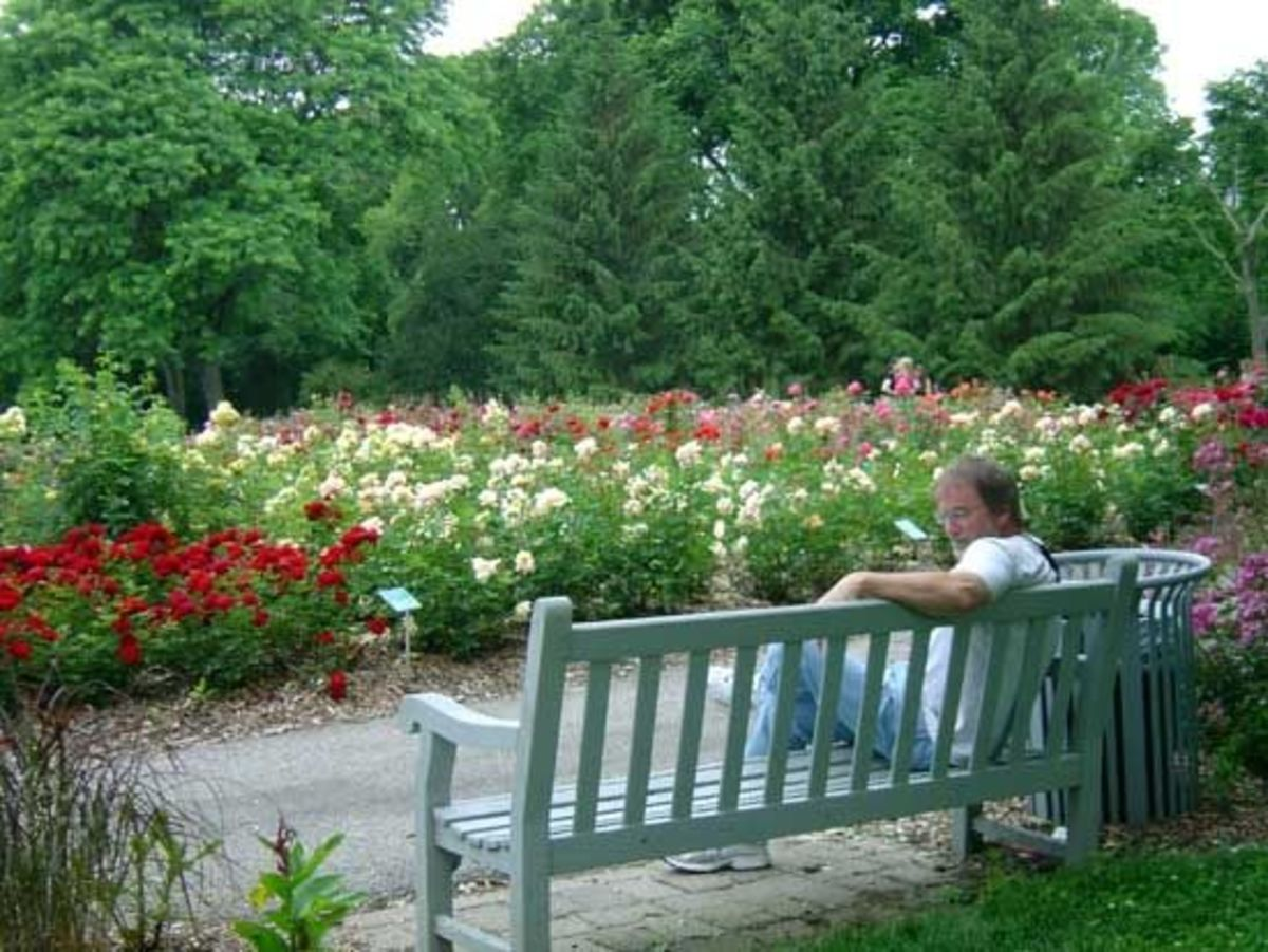 June is in full bloom at Whetstone Park of Roses