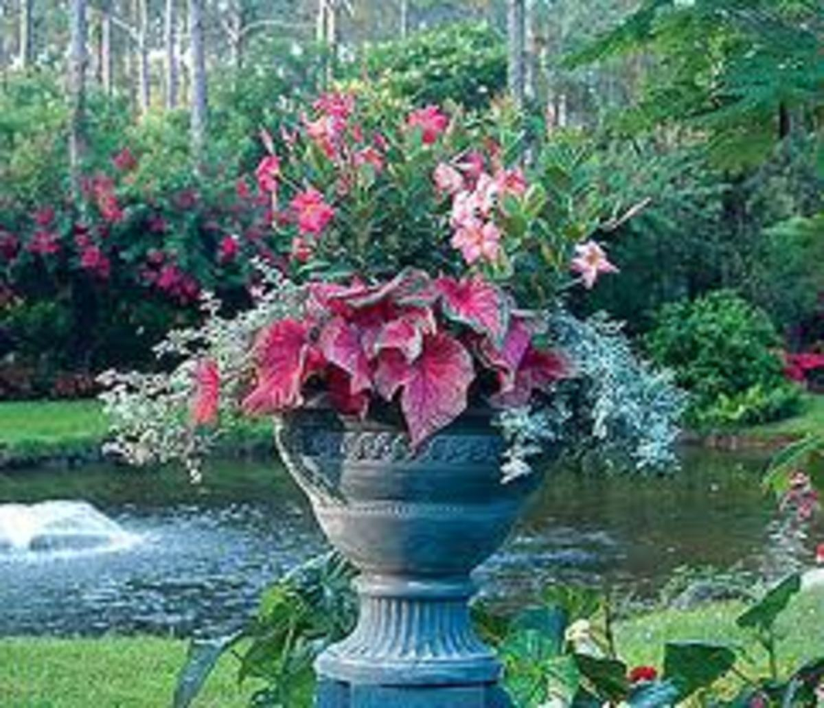 The Beauty of Easy Container Gardening Ideas