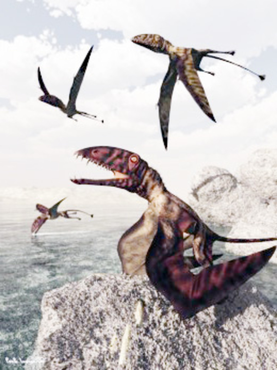"Dimorphodon macronyx ""flying dragon"""