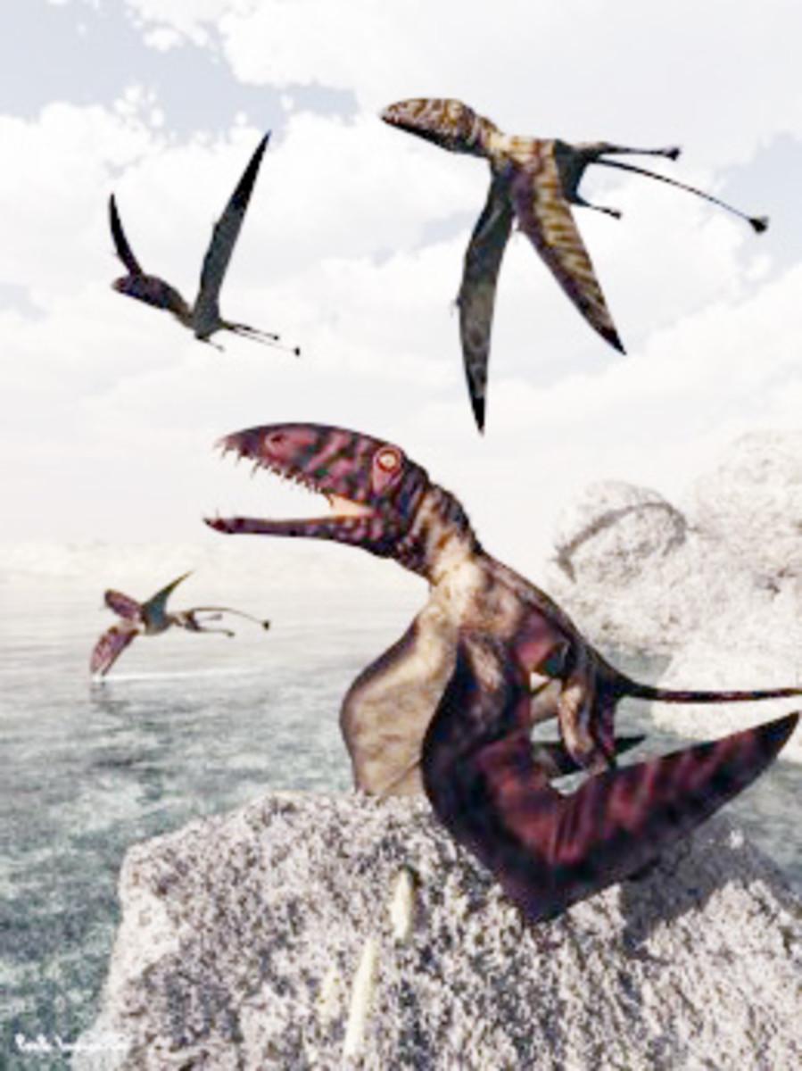 """Dimorphodon macronyx """"flying dragon"""""""