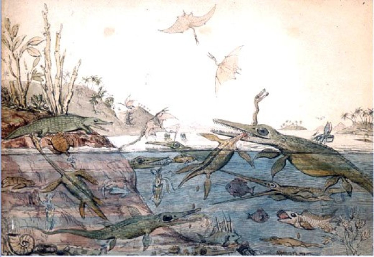 """""""Duria Antiquior""""or ancient Dorset, base on the fossil discoveries of Mary Anning"""