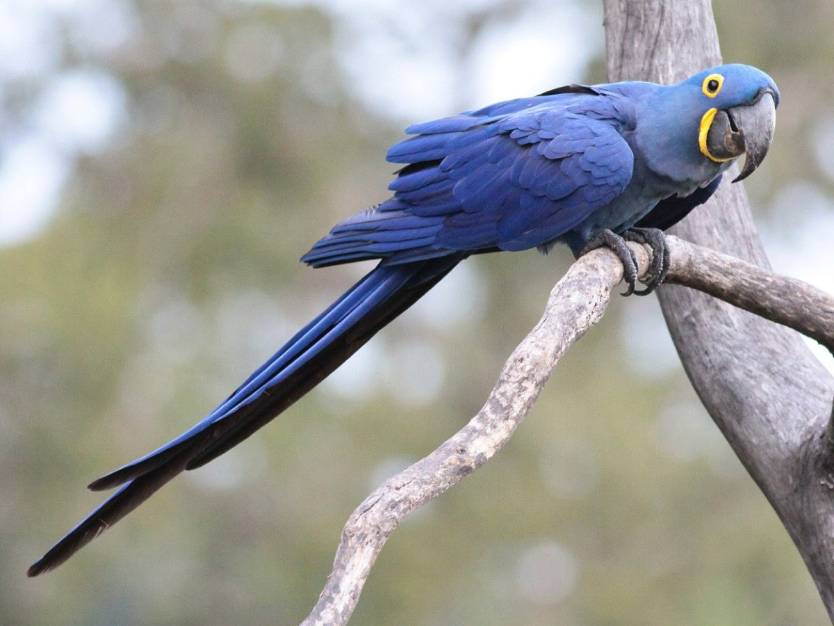 facts-about-the-most-beautiful-birds-around-the-world-you-may-not-know