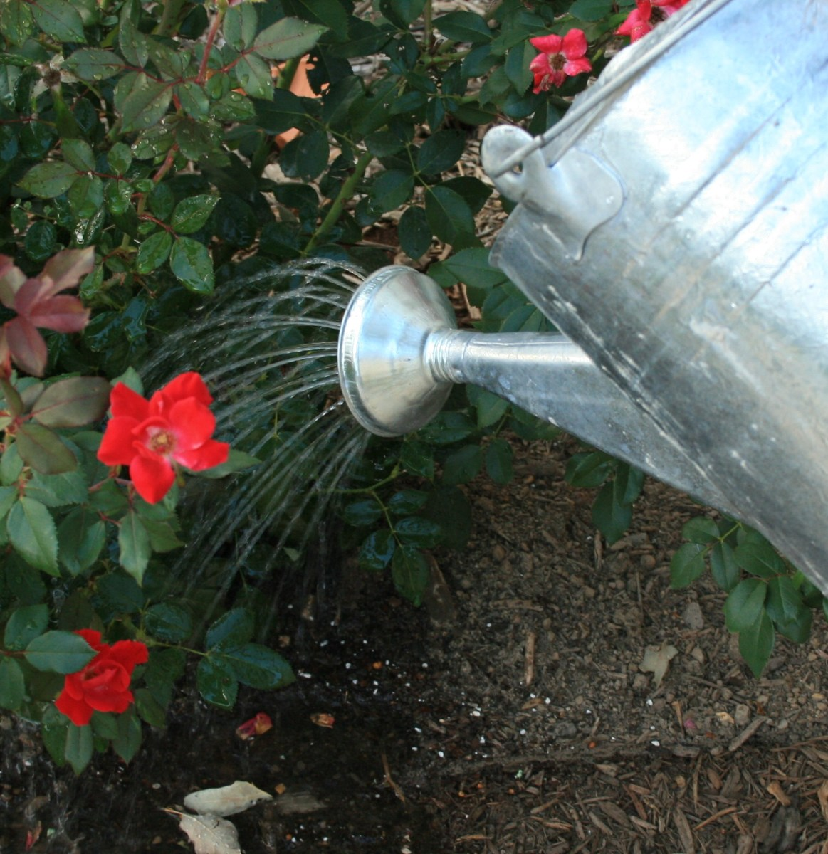 Don't flush your urine down the drain. Wet your plants! Human pee is full of nitrogen and other nutrients plants love.
