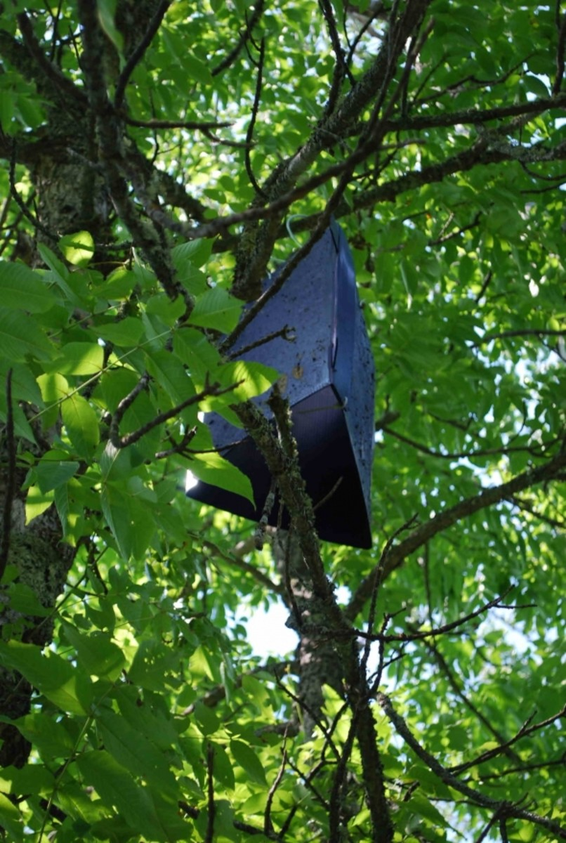 Emerald Ash Borer detection trap