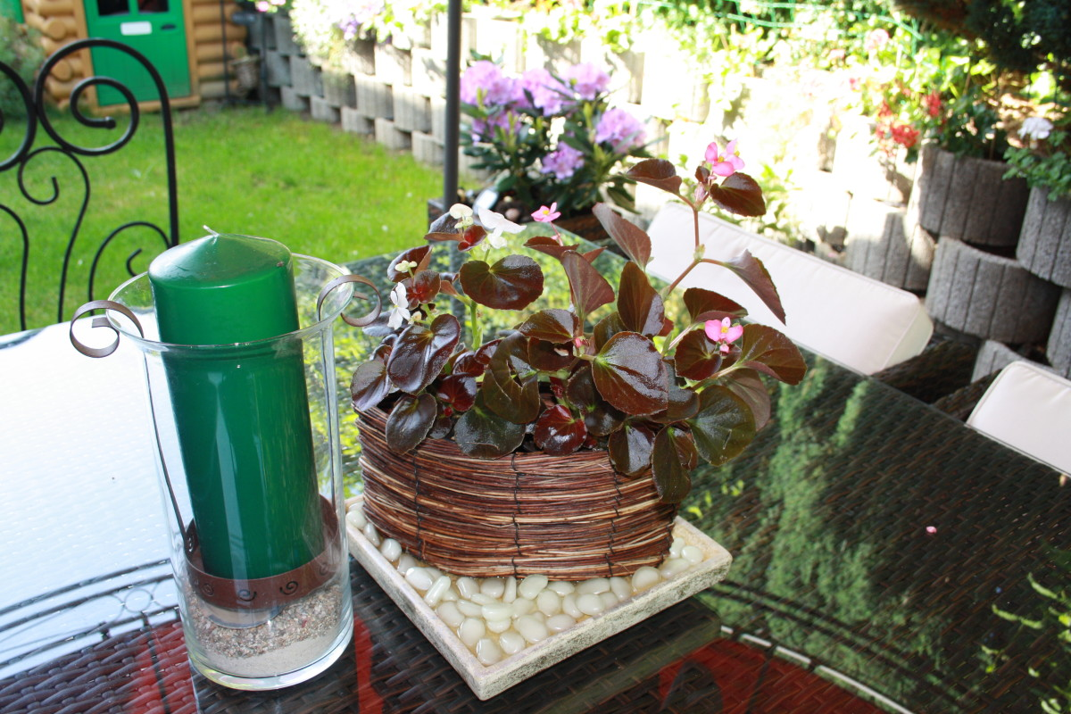 Begonia Flower Candle Stand Deco in The Patio,  My Garden - My Favorite Flowers