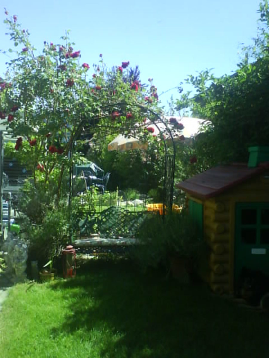 The Rose Arch and Playhouse in My Garden