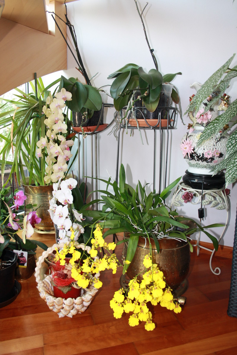 Orchids in My Half Wintergarden, At Home