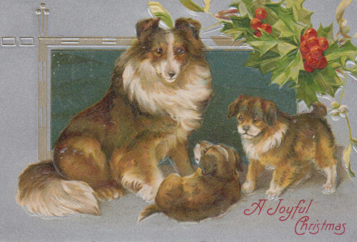 Christmas Collies