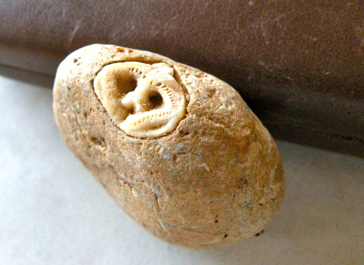 A Rockhound's Discovery - Is It An Alien Fossil or an Ancient Native American Carving?