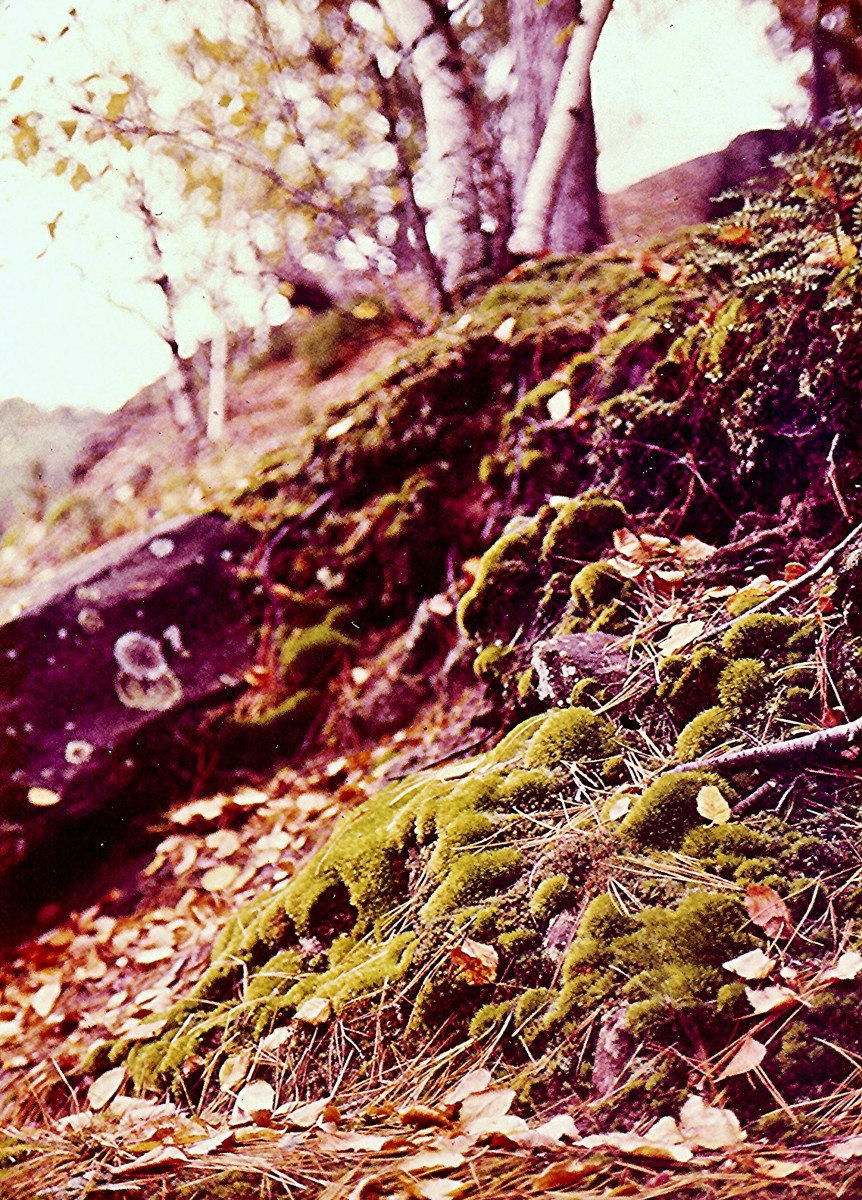Closeup of moss growing in the Wisconsin Dells.