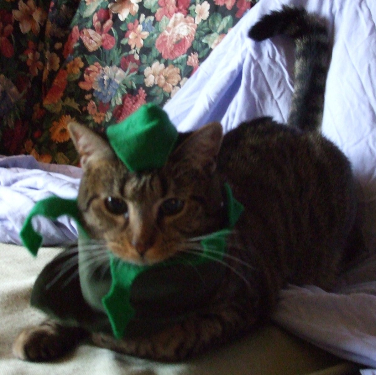 Skeeter is a very good Robin Hood (or court jester.)