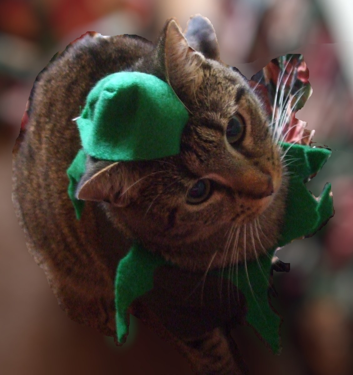Even Skeeter the mischievous Nixnuts Cat can keep a costume on for a few minutes.