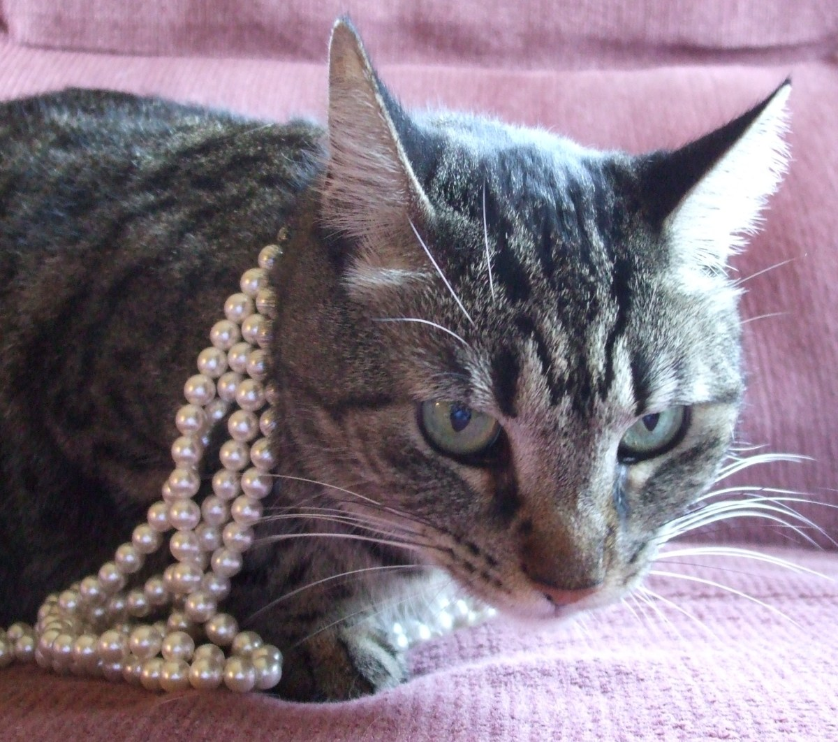 The Goddess is not pleased with a simple strand of pearls for her Glam Witch look.