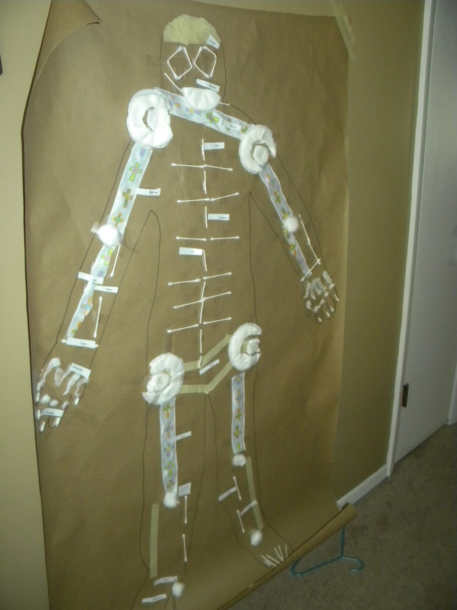 Our Final Bone Project