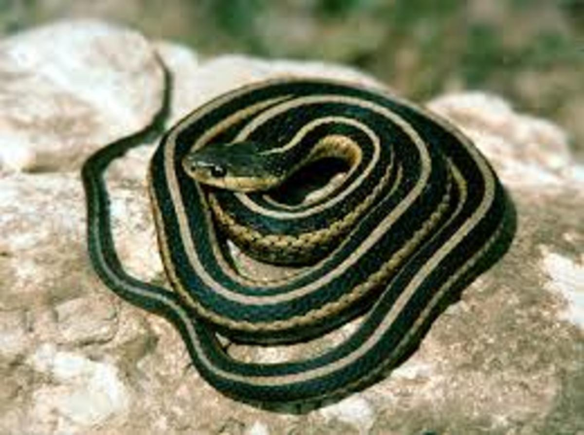 Scorpio is associated with many scary & venomous animals such as scorpions,insects, & reptiles, particularly snakes. Snakes symbolize Scorpio in that they shed their skin.Scorpios are quite adept at the art of transformation.