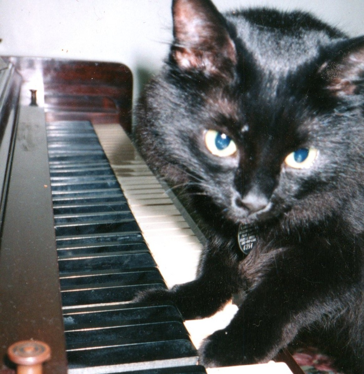I put treats between the piano keys to set up Blackette for this photo. While she was looking for them, I called her name. She looked toward me to make the perfect picture!