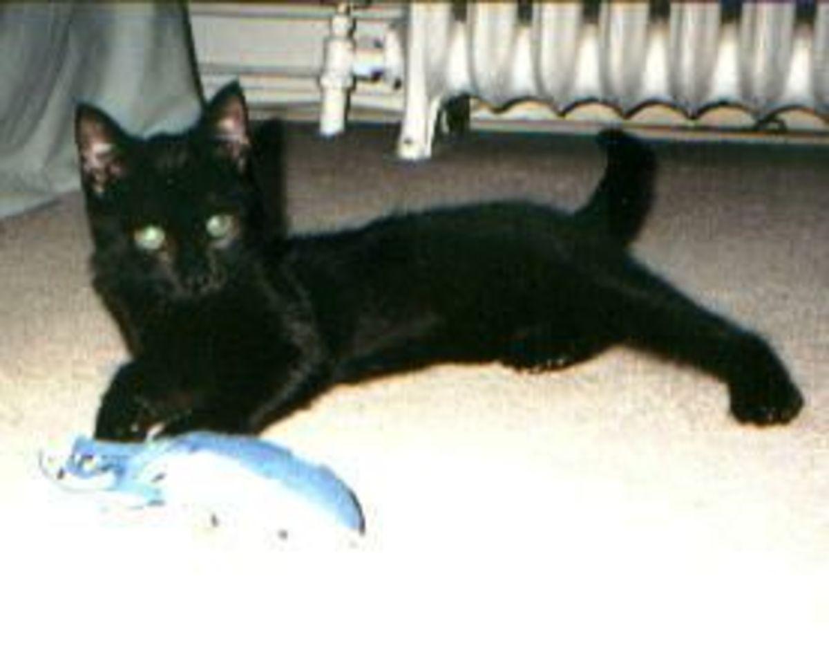 Sully Kitten