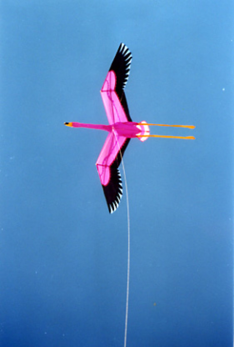 Our flamingo kite was our pride and joy ...sadly, that frizzled once we got there.