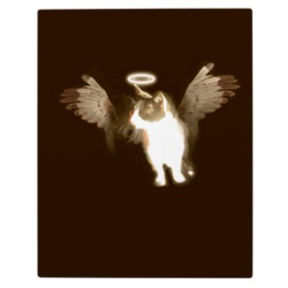 This vintage-style angel kitten comes on a whole host of gifts and cards that you can personalise by adding your own text and images http://www.zazzle.com/vintage_angel_kitten_plaque-200726671046219280