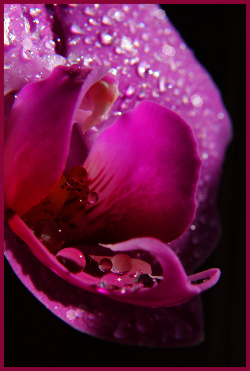 Be sure and look at the water droplets on this image, especially the perfectly circular drops resting in the heart of this flower.