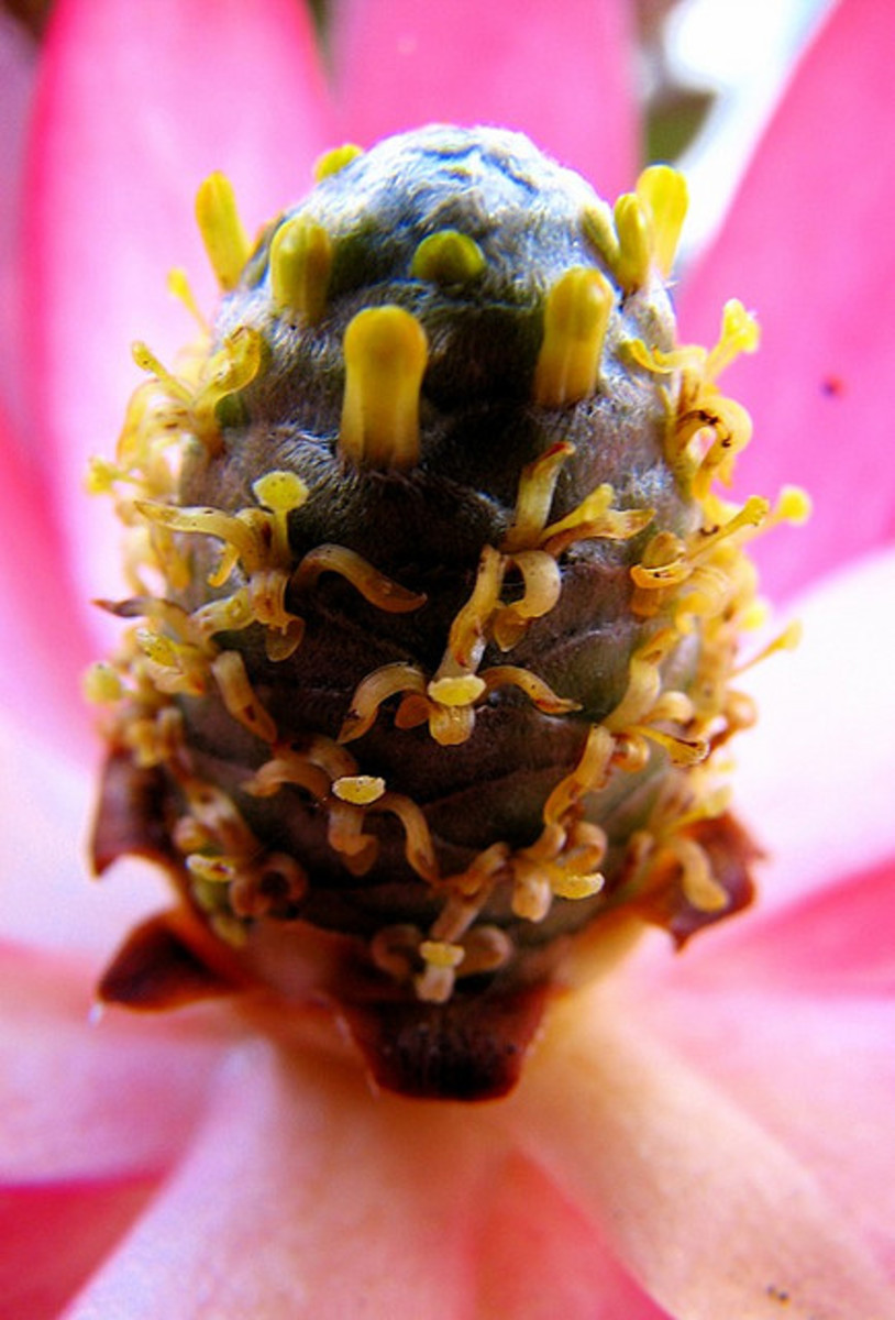 The ovary of this flower takes on a very alien appearance when viewed this closely.