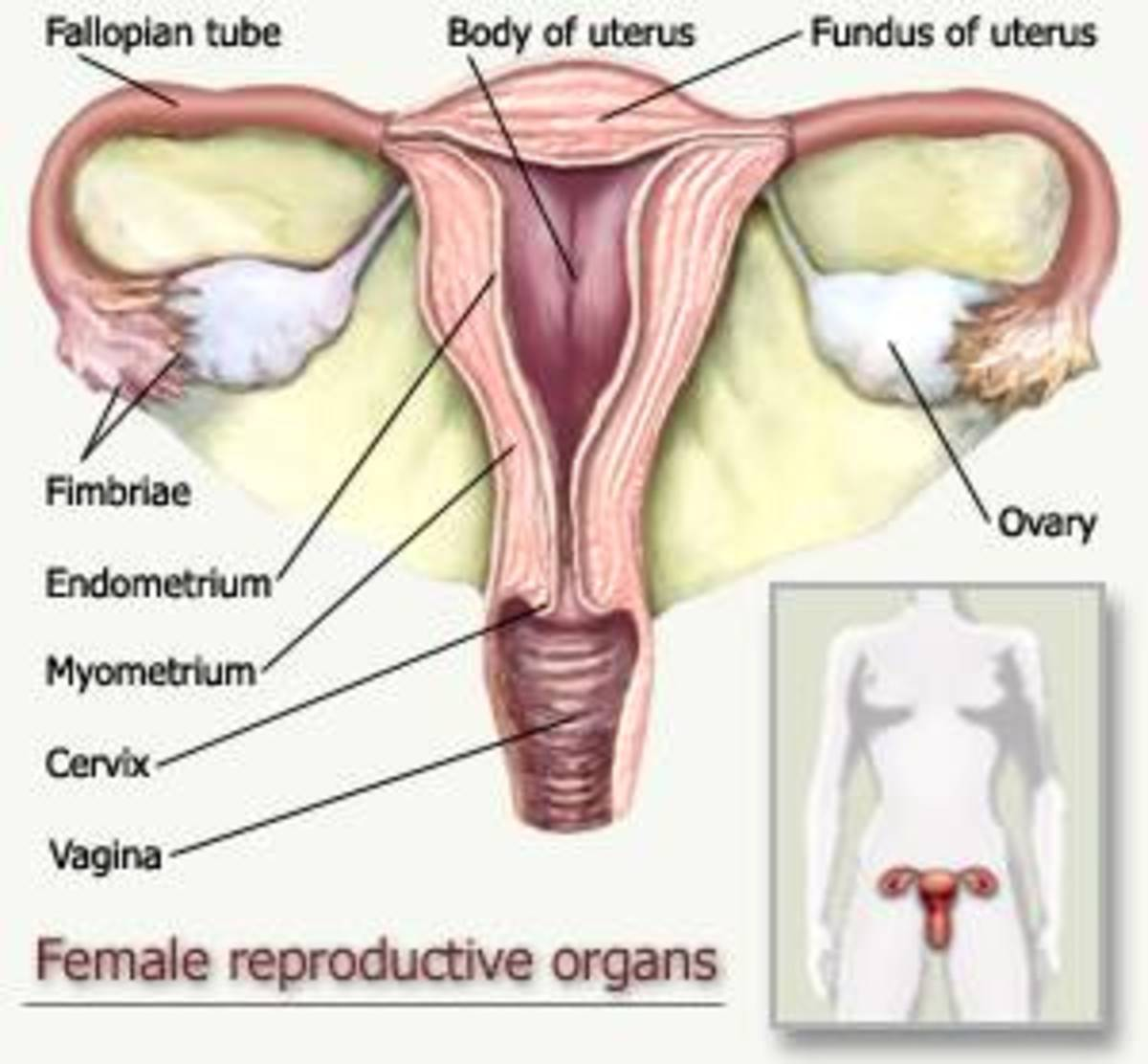 The Difference Between Cysts on the Ovary and Ovarian Cancer