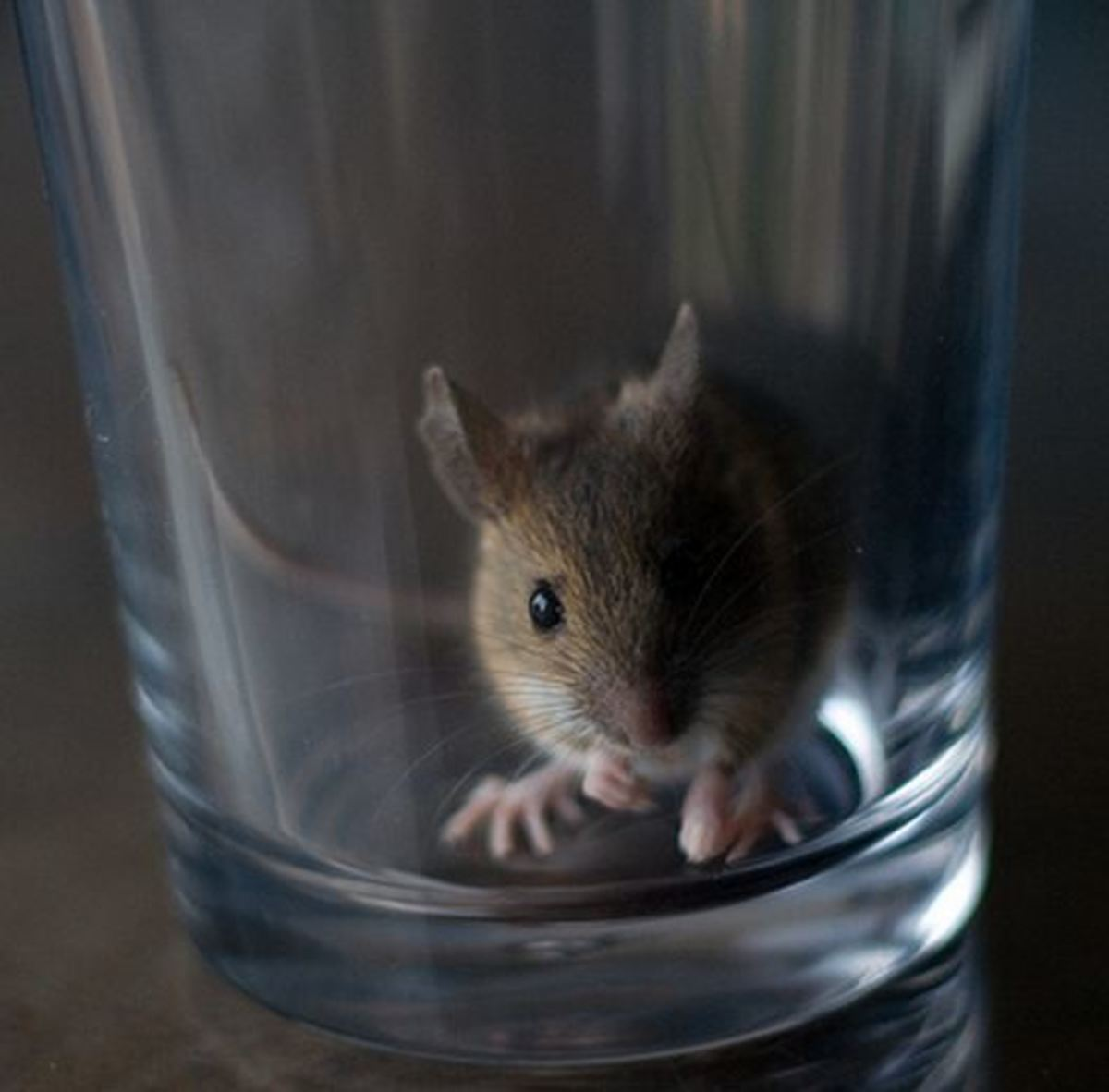 Best Mouse Trap for a Lost Pet Mouse