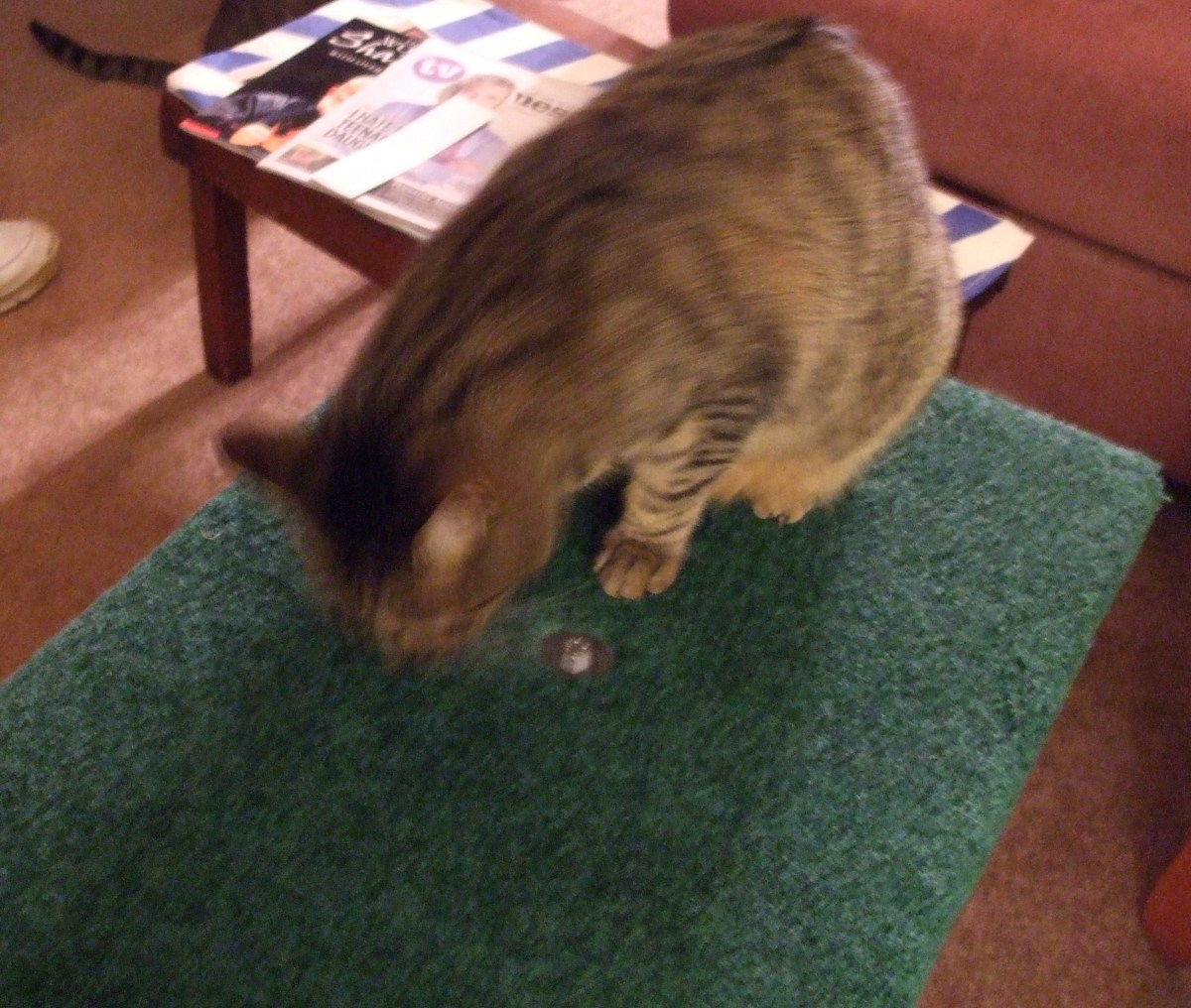 Skeeter, my most adventurous cat, puts the new large platform through its paces.