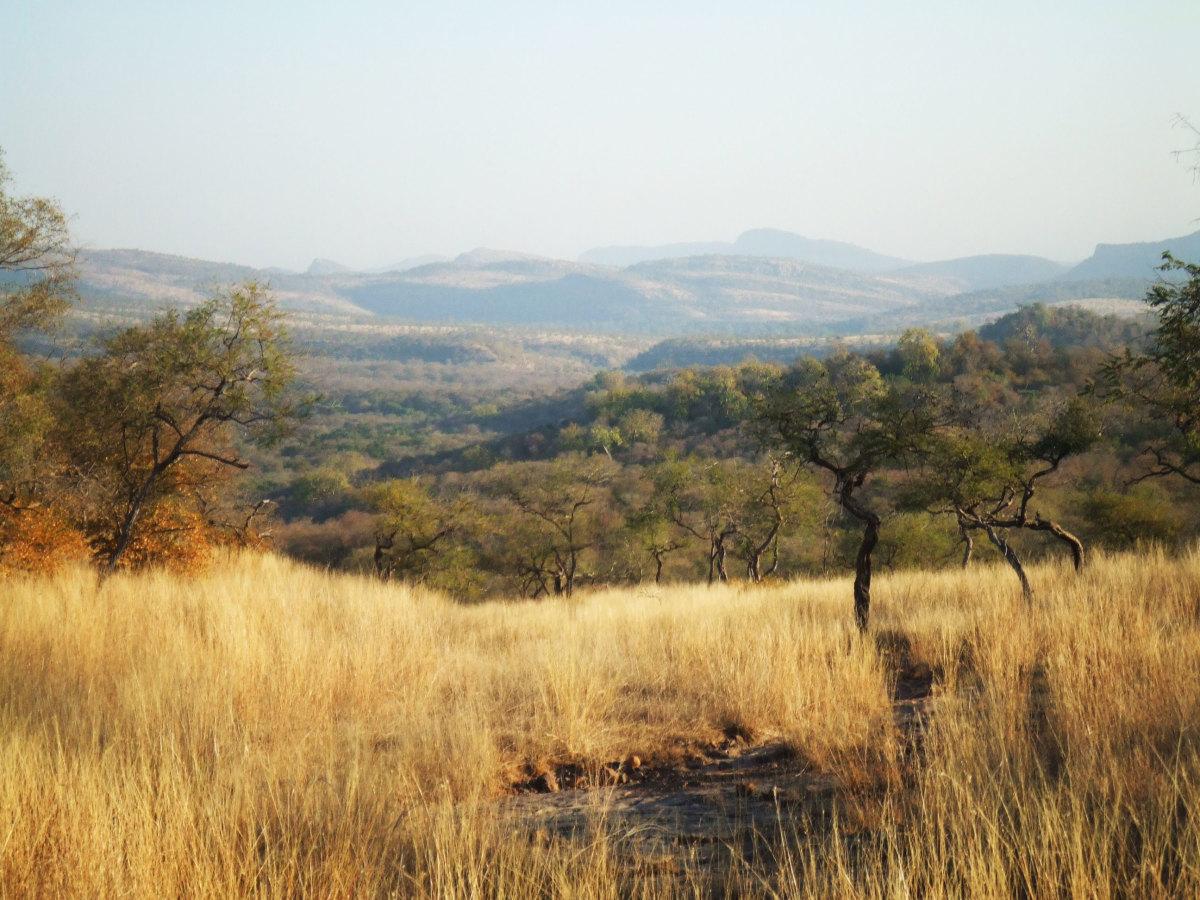 Ranthambore National Park - Wildlife Safari in India